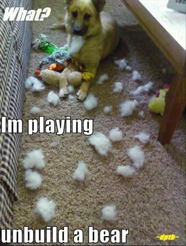 Amazing Creatures: 30 funny animal captions - part 2 (30 pics) Like this.