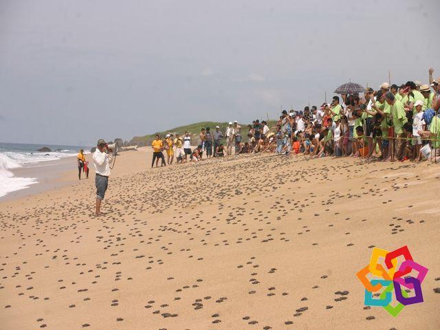 MICHOACÁN MÁGICO En Michoacán nos interesa el medioambiente, algunas de las medidas que se toman en playa Ixtapilla para cuidar a las tortugas que llegan a desovar, es el haber establecido un sistema de vigilancia por parte de los pobladores, donde también participa la Marina Armada de México, la SERMARNAT y algunas organizaciones civiles. HOTEL ALAMEDA http://www.hotel-alameda.com.mx/