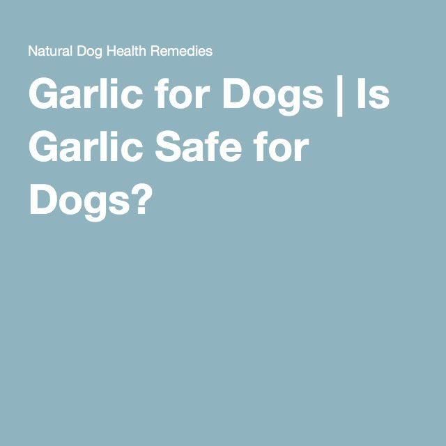 Garlic for Dogs   Is Garlic Safe for Dogs?