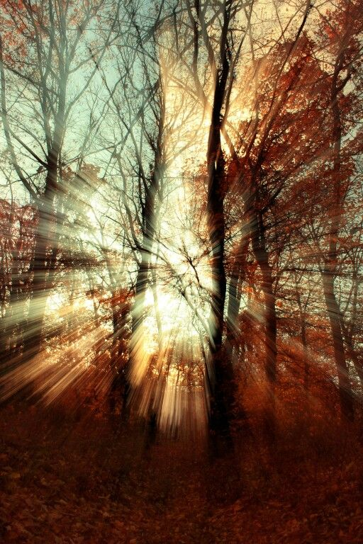 Autumn forest rays. I really love this photo because is full of light. Nature photography. Wonderful autumn colors. Teenager photographer from Romania @ionpaulaelena