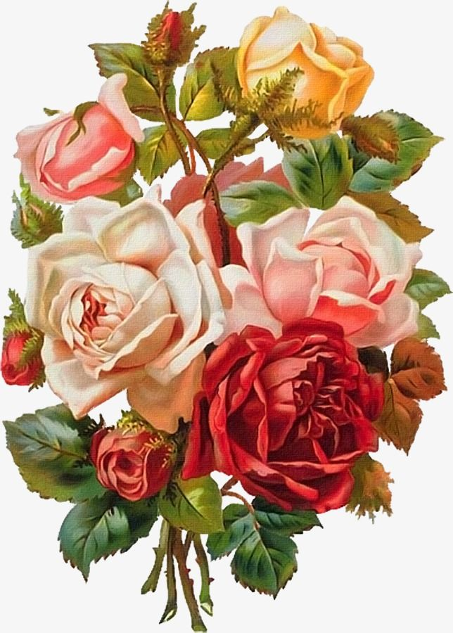 Hand Painted Flowers Hd Flowers Png Flowers Rose Peony Png Transparent Clipart Image And Psd File For Free Download Vintage Flowers Vintage Roses Botanical Flowers