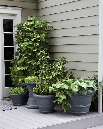How to create a container garden on your patio---good example of same color planters and how good that looks (paint old planters same color to re purpose)