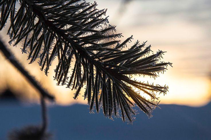 Kleine #Eiskristalle umhüllen die Tannennadel in #Finnland. #Lappland hat noch viel Schnee, der Frühling kommt sehr langsam. Aber von Tag zu Tag gibt es immer mehr Licht und Wärme. #Kalevalaspirit #Natur