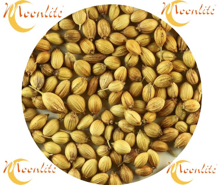 Indian Coriander Seeds Supplier and Manufacturer  At Moonlite food Inc we are Best quality Indian hole Spices Manufacturer and Exporter. Here we tell you about our Coriander Seeds Indian spices.    Know more about our Coriander Seeds Products ;- https://goo.gl/dXoYHE