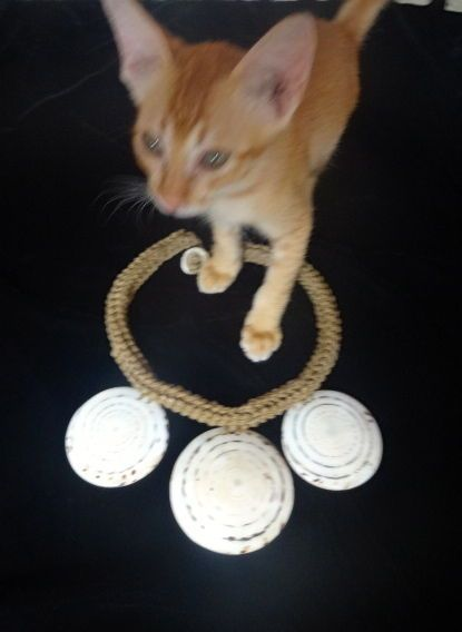 Ethnic 3 Round Conus Shell Necklace Cat Jewelry Boho Luxe Home Decor Interior #SavageHarvest