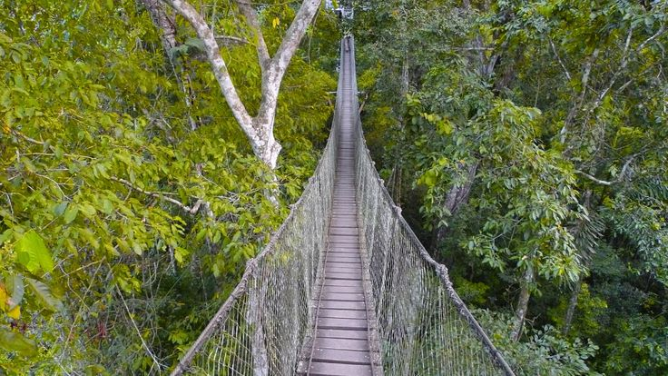 Rainforest Canopy Walkway 2017