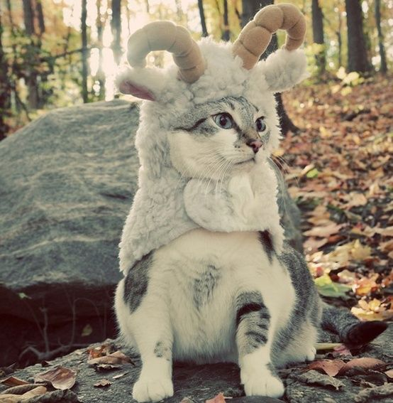 25 Ridiculously Cute Animals Wearing Halloween Costumes: Obsessed: Entertainment: glamour.com