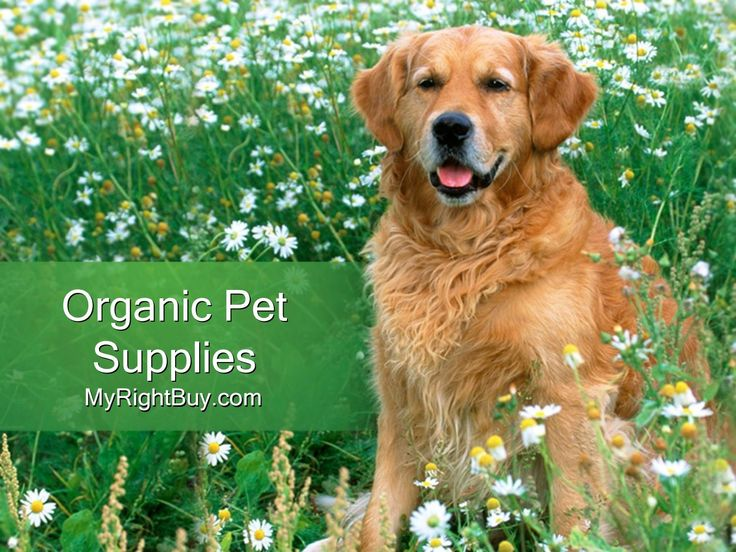 Organic Pet Supplies Online