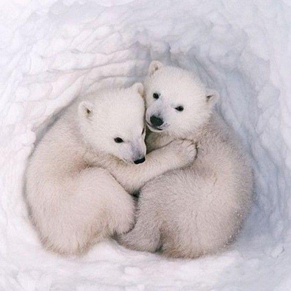 Cute animals celebrate International Hug Day | Adorable baby ...
