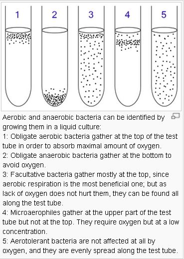 microbiology lab class notes Biology 1290b lecture notes 1-7 1 biology 1290b: an introduction to general microbiology 1 microbes, an introduction the scale of the invisible world' there are a thousand millimetres in a metre.