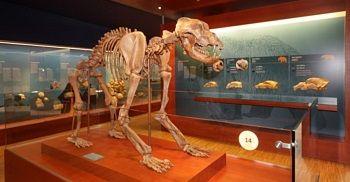 Ursus Ladinicus