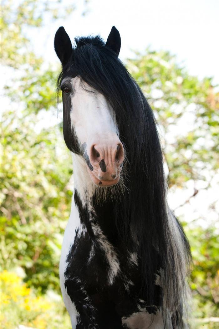 Estes Cavalos Têm as Crinas Mais Belas Que Eu Já Vi!