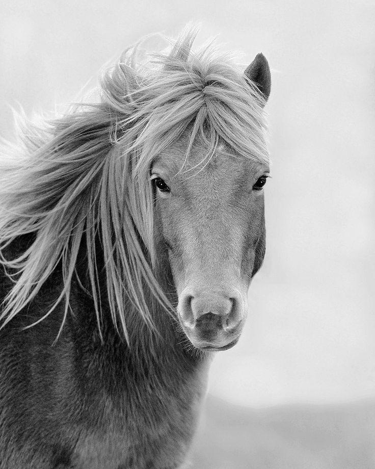 Windblown wild horse photograph wildlife by natureisart