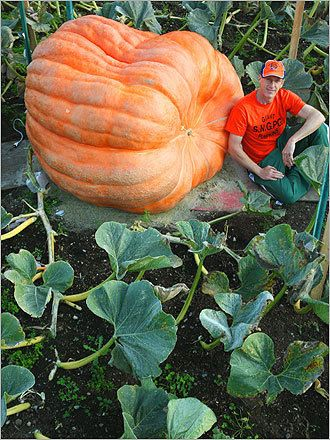 Atlantic Giant Pumpkin -