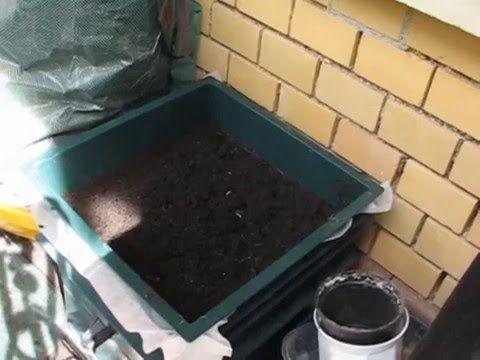 Wurmkompost ernten | Kräuterbalkon