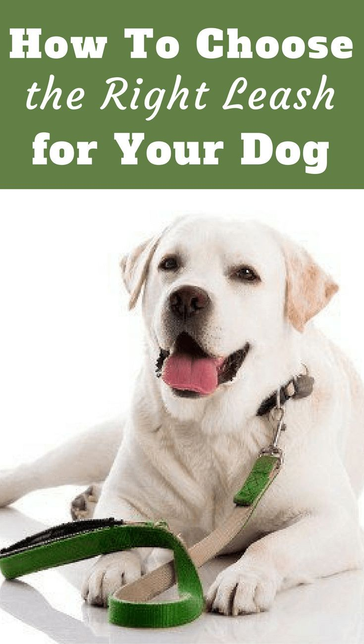How To Pick The Best Dog Leash For Everyday Use Or Training