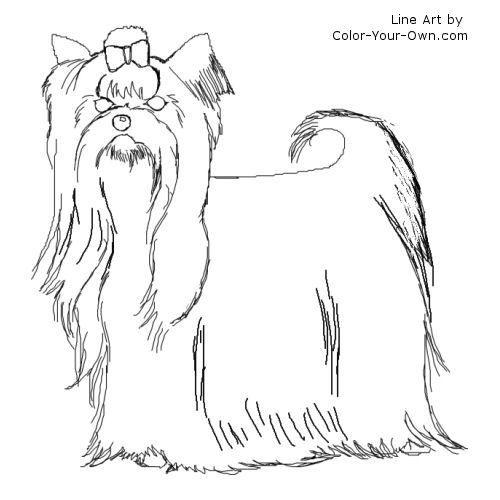 Yorkshire Terrier Dog Line Art Dog Line Art Sketches