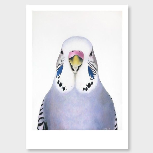Image result for budgie print