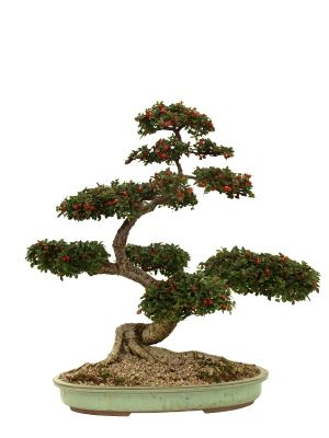 How to Take Care of Bonsai Plants