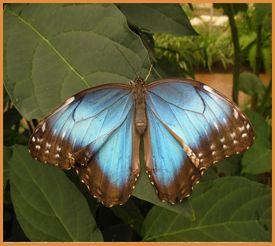 Benalmadena Butterfly Park - http://www.b-met.com/blog/butterfly-park-benalmadena-mariposario-de-benalmadena/