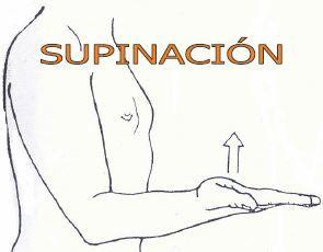 SUPINACIÓN. Es el movimiento del antebrazo y de la mano, por el  que el radio gira lateralmente sobre su eje longitudinal, del suerte que el dorso de la mano mira en sentido posterior, y la palma en el sentido anterior .