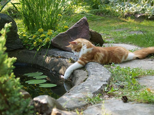 Jus makin sure the water's not too warm for the fishies.