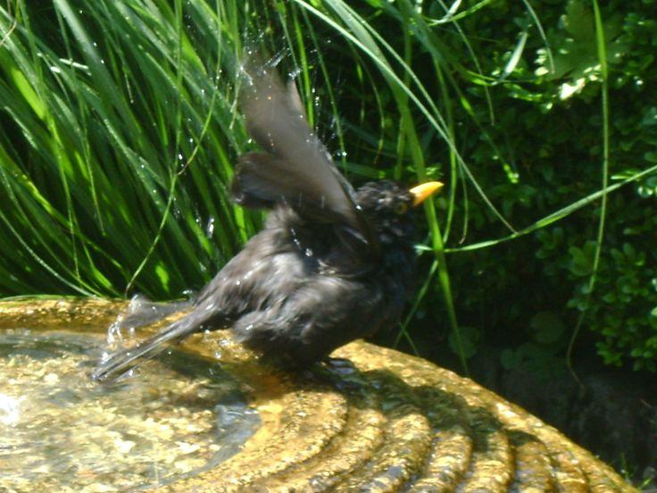Bye, till the next! The blackbird had fun.