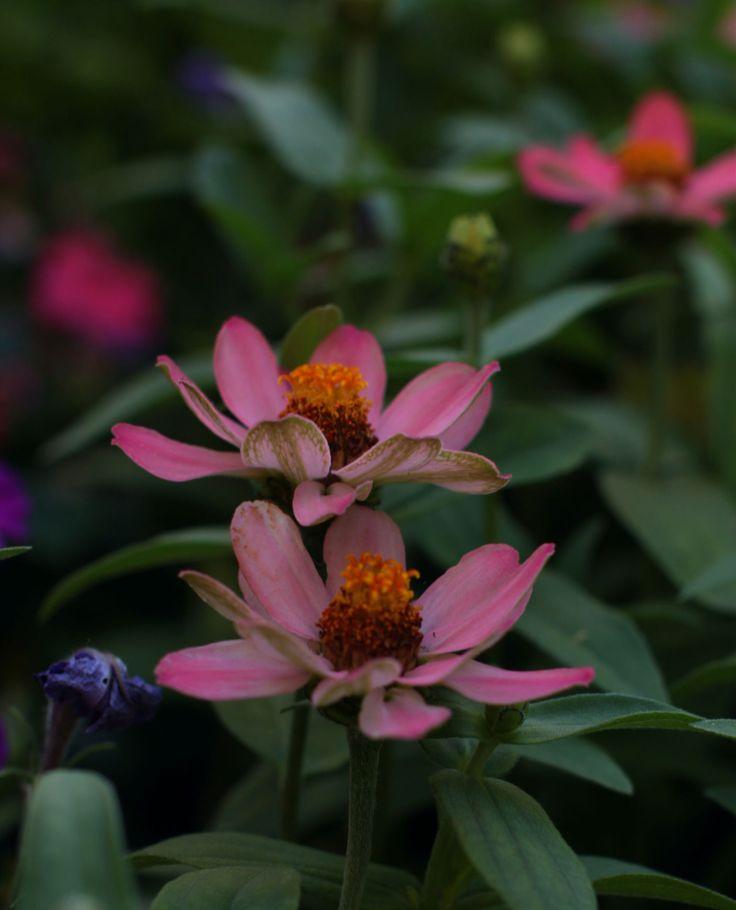 faire livrer des bouquets à domicile 025 #fleurs #bouquet