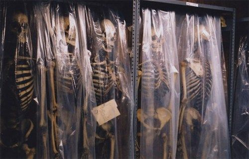 Human Skeletons hanging in the basement of the Mutter Museum in Philadelphia.