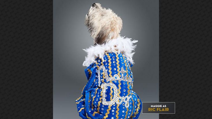 Maggie as Ric Flair: The Nature Dog WOOOO  Check out more: http://wwe.me/lkyaE