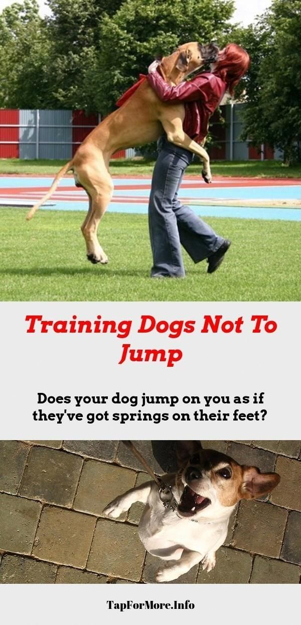 Stop Dog Jumping And Teach Dog To Fetch Check The Pin For