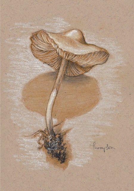 "mushroom drawings pencil | Mushroom Study #2 , pencils and pastel on paper, 7 x 5"", by Tracie ..."