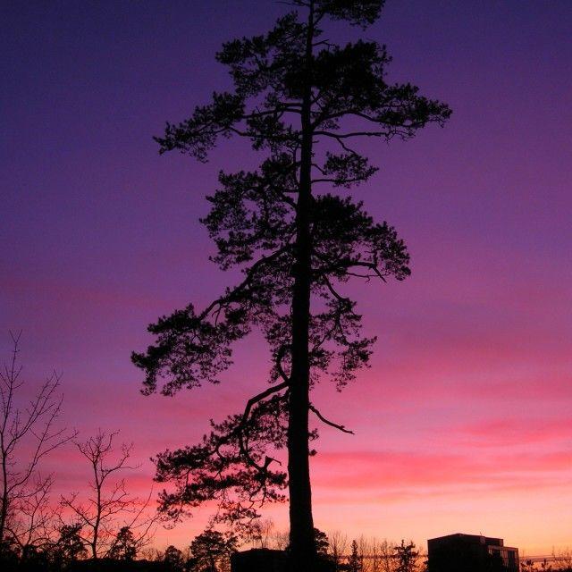 'Purple sky, pine tree' on Picfair.com