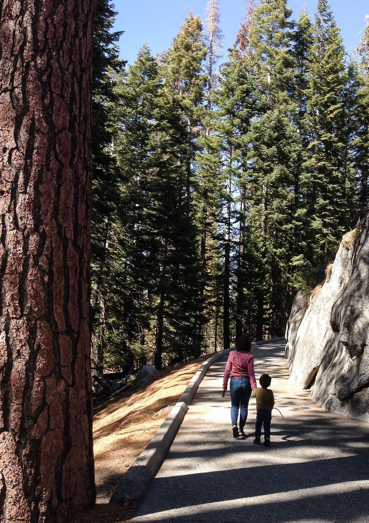 What are the best Yosemite hikes with kids? Here are 5 suggestions for easy hikes in Yosemite, including dog-friendly hikes in Yosemite, too!