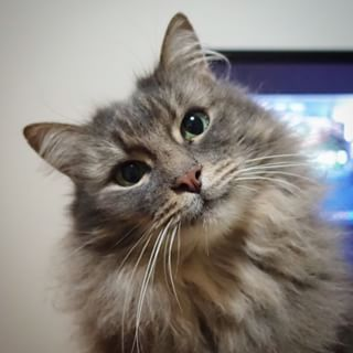 meowoof @meowoofau Instagram photos | Websta (Webstagram)