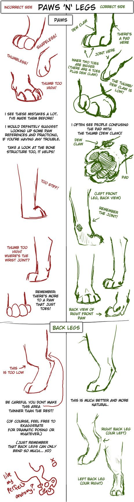 Big Cat Paw and Leg Tutorial by *TamberElla on deviantART Paws, legs, cats, dogs, canine, wolf, wolves