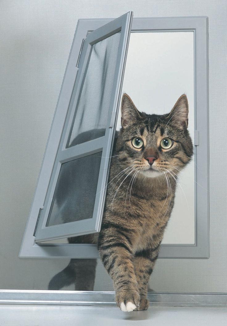 2 cat door - wonderful catsize screen door! #cats #CatDoor