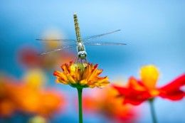 What's a Dragonfly Habitat Like? What Do Dragonflies Eat? Find Out Now