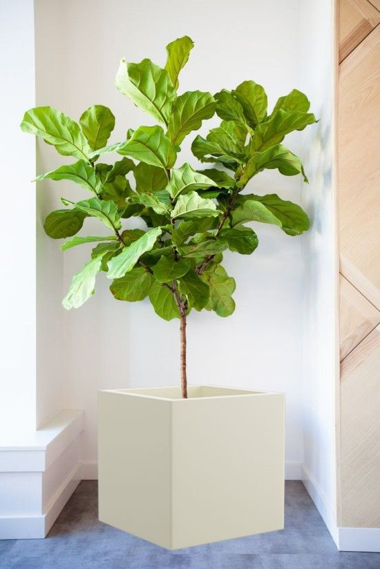 Hanging Wall Planter 94 best hanging planters images on pinterest | hanging planters