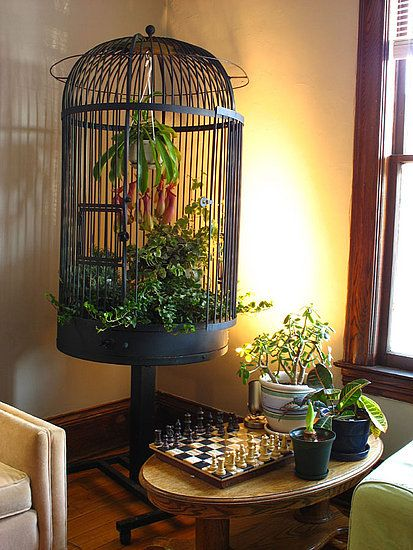 The 9 best images about birdcage planters on pinterest for Cage a oiseaux decorative