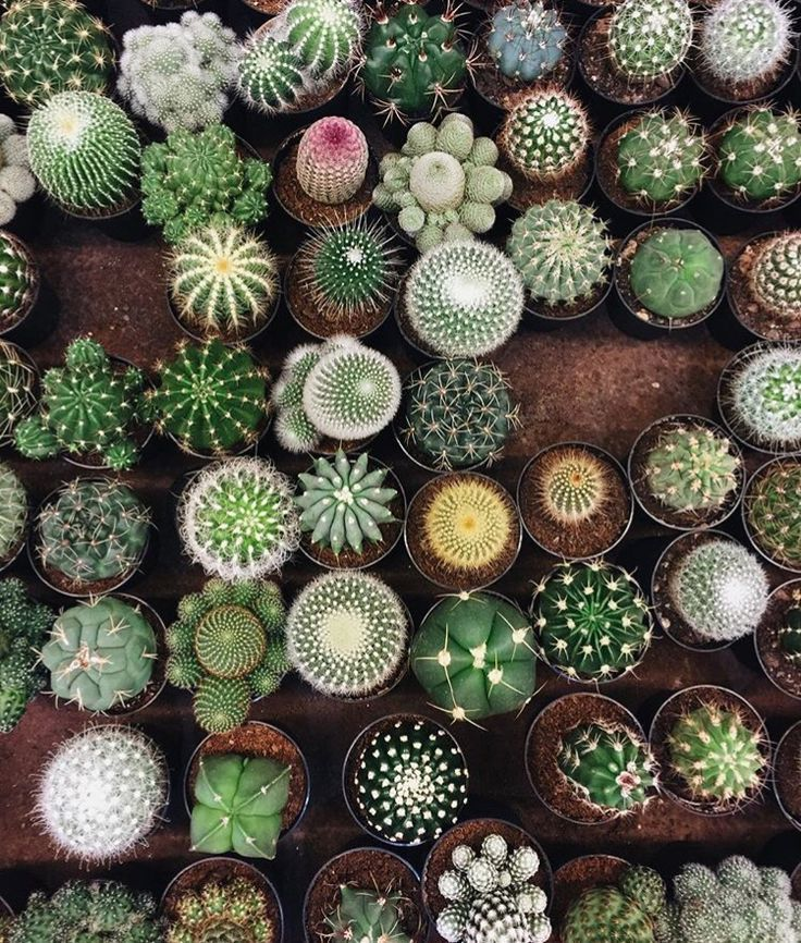 Oh My Goodness Look At All Those Cuties Plants Cacti And