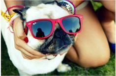 cheap ray bans sunglasses