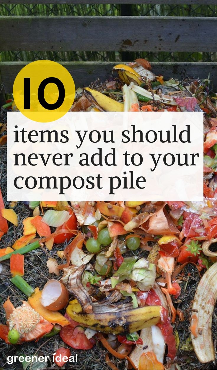 Rather than transferring the biodegradable kitchen and household waste to the landfill, building a compost pile is a practical solution to the waste problem. Compost can inhibit some plant diseases and pests, remove the need for chemical fertilizers, and increase the water efficiency of your plantings. However, some things should never go into your compost bin or pile.