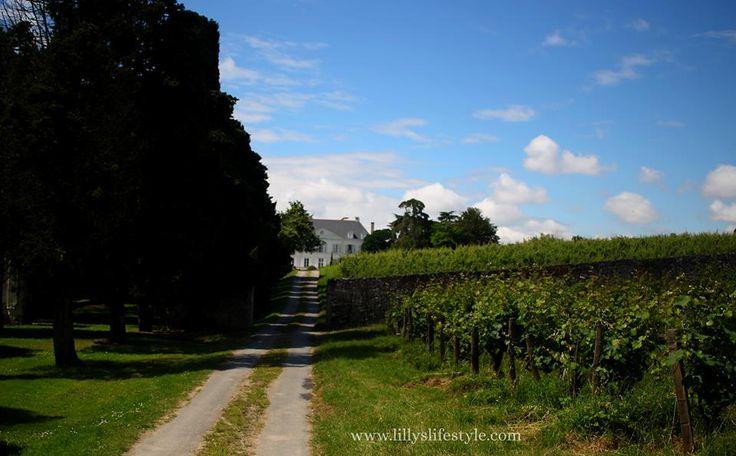 #valledellaloira #francia #travel #ontheroad #wine #wienyard http://wp.me/p2Soop-4tX