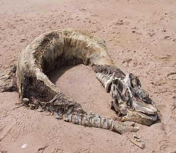 Tale of 10 Sensational Sea Serpents Mysteries