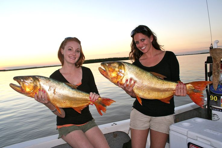 Golden Dorado Fishing in Argentina!  TGB Outfitters