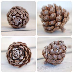 Pine cone winter 2014   by Sofie Dahl