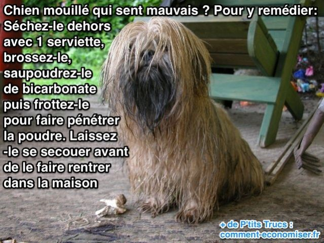 Utilisez du bicarbonate pour enlever les mauvaises odeurs de chien mouillé