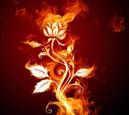 Image result for rose de feu