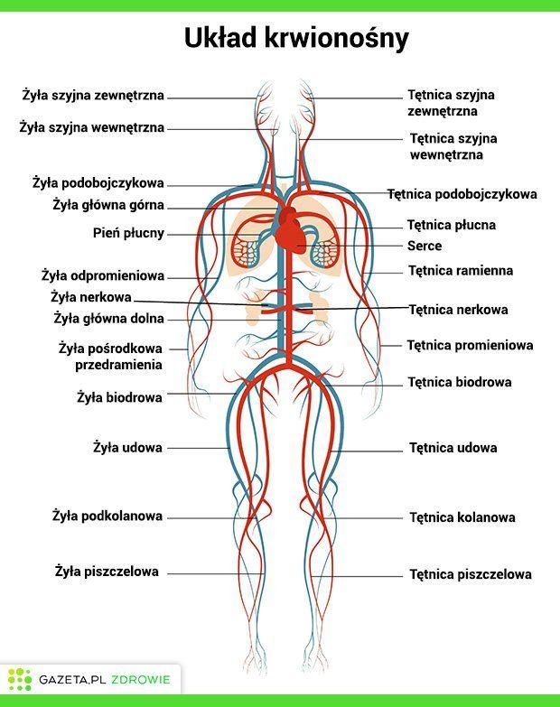 biologia villego pdf po polsku
